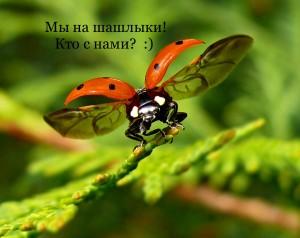 1400578273_bozhya-korovka